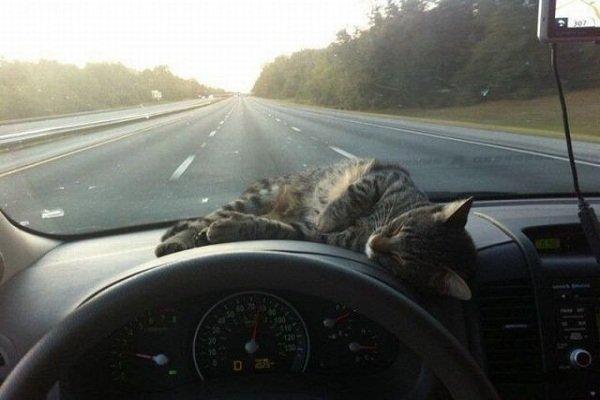 Как не уснуть за рулем в дальней поездке