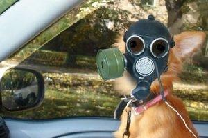 Запах из кондиционера автомобиля