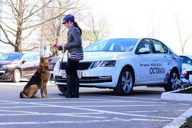 АСЦ SKODA уверен: собакам из приюта «Дубовая Роща» ПОРА ДОМОЙ!